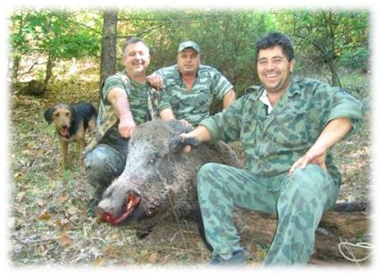 дива свиня, ivaylovgrad