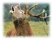 ивайловград, ловно сдружение, лов