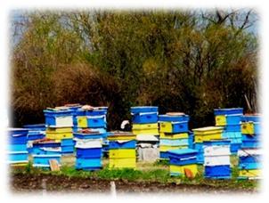 пчеларство, програма, субсидии