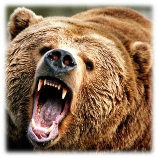 мечка, гора, ивайловградско