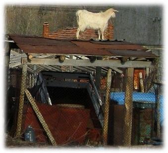община ивайловград, незаконни постройки, разрушават, кокошарници