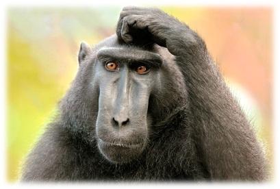 ивайловград, маймуни