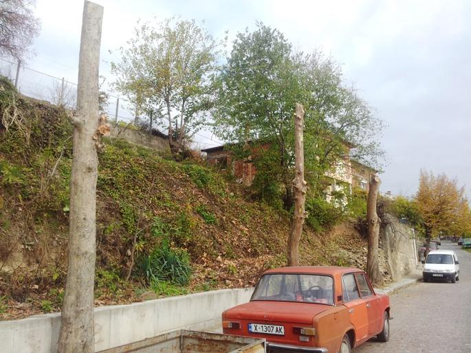 Чинари в Ивайловград, озеленяване